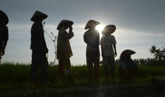 Ilustrasi Petani Indonesia - berdikarionline.com
