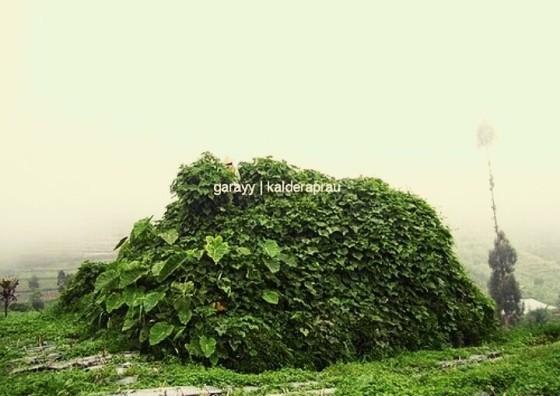 (Menurut penduduk, ini adalah bongkahan puncak Pangamun-Amun yang menimbun dusun Legetang)