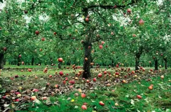 Bagi mereka yang percaya konsep bumi datar, apel bukan jatuh, tapi bumi yang naik menangkapnya