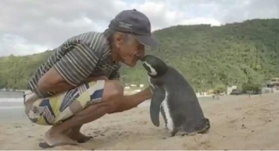 Gemas Tapi Mengharukan, Penguin Ini Berenang 8.000 KM Hanya Demi Bertemu Penyelamatnya. (Brightside)